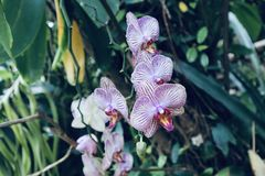 Wild orchid growing in a botanic garden royalty free stock photo