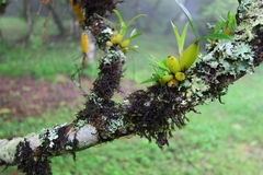 Wild orchid and moss on branch of tree Stock Image