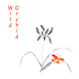 Wild Orchid vector illustration