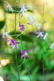 wild orchids Arkivbild