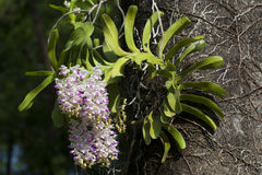 Wild orchids and a garden. Stock Image