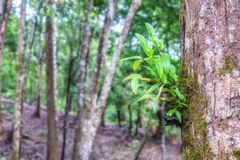 Wild orchids on tree in rainforest Royalty Free Stock Photos