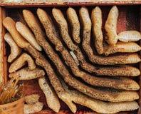Wild Organic honeycomb stock photos