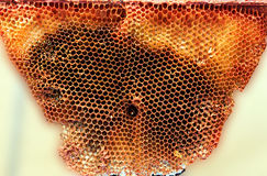 Wild Organic honeycomb Stock Photography