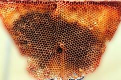 Wild Organic honeycomb stock photography