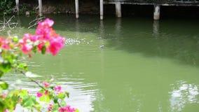 Wild ornament van aard, Moerasbloemen en goede gelukkever Bloeiende gouden kleureninstallaties in de vroege lente door rivier tij stock video
