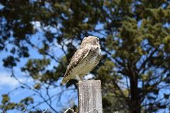 Wild owl in its natural habitat in nature stock images