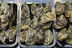 Wild Oysters Royalty Free Stock Photos