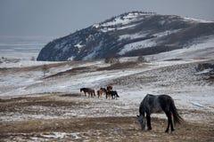 Wild paard Stock Foto's