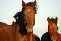 Wild paard Hello Royalty-vrije Stock Afbeeldingen