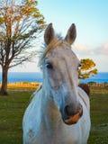 Wild paardclose-up bij het landschap Chili van Patagonië stock fotografie