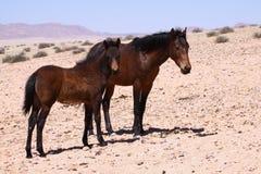 Wild paarden Stock Afbeeldingen