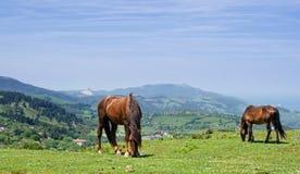 Wild paarden Royalty-vrije Stock Fotografie