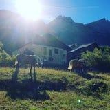 Wild paarden bij het chalet royalty-vrije stock afbeelding