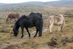 Wild paarden bij het weiden tijdens de regen royalty-vrije stock foto's