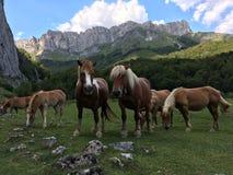 Wild paarden in de Pyreneeën Frankrijk royalty-vrije stock foto's
