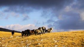 Wild paarden die op montain, wolken op de achtergrond lopen Royalty-vrije Stock Afbeelding