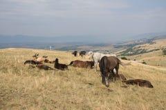 Wild paarden en een monumenten gevallen militairen Royalty-vrije Stock Foto's