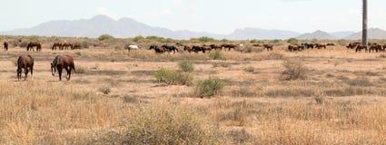 Wild paarden in het Land Royalty-vrije Stock Afbeelding