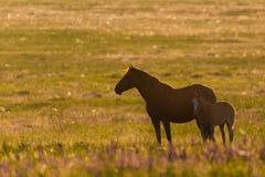 Wild paarden, merrie en veulen in het wilde leven stock foto's