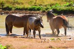 Wild paarden op de hete dag van de dagzomer Stock Fotografie