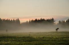 Wild paarden op een weiland Stock Foto's