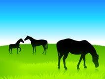 Wild paarden op groene gebiedsachtergrond Royalty-vrije Stock Afbeelding