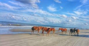 Wild paarden op het Strand Royalty-vrije Stock Afbeeldingen