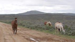 Wild paarden Wyoming stock footage
