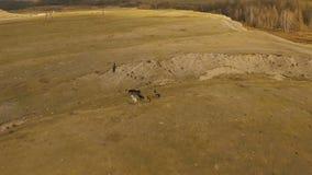 Wild paardenkudde die op Weide lopen stock videobeelden