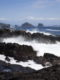 Wild Pacific Trail royalty free stock photos