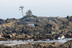 Wild Pacific Trail, Ucluelet, BC Royalty Free Stock Image