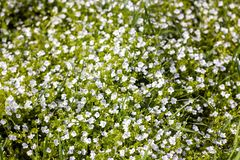 Wild flowers pattern in green field at spring or summer stock photo