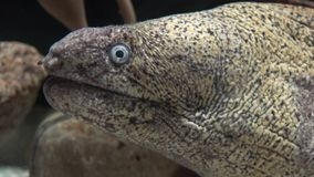 Wild palings onderzees schepsel stock footage