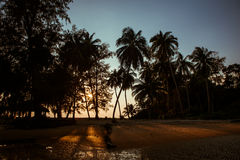 Wild palm trees beach evening sunset Royalty Free Stock Photography