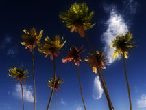 Wild Palms Royalty Free Stock Photo