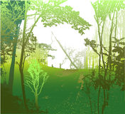 Wild panoramic landscape with sunny forest, silhouettes of trees and grass Stock Photos