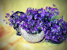 Wild pansy flowers in vase Royalty Free Stock Images