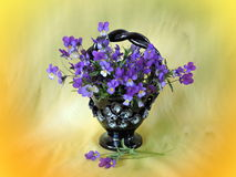 Wild pansy in vase Stock Image