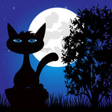 Wild panther on nature in the night Stock Photography
