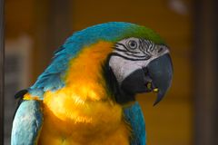 Wild parrot. Parrot illuminated to the dusk Royalty Free Stock Photography