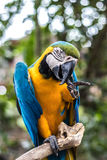 Wild parrot bird. Colorful parrot in Bali zoo, Indonesia. Royalty Free Stock Images