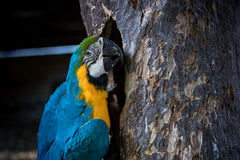 Wild parrot bird on a tree in nature, park of Bali island, Indonesia. Royalty Free Stock Image