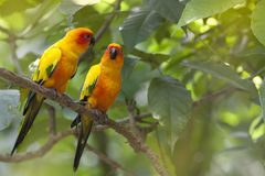 Wild Parrot Stock Photo