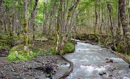 Wild Patagonian Forest, El Chalten Stock Image