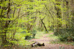 Wild path entrance in forest Stock Photography