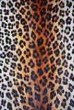 Wild pattern Stock Image