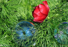 Wild peony and bubble Royalty Free Stock Images