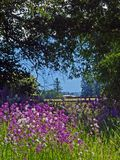 Wild Phlox and Fence Stock Image
