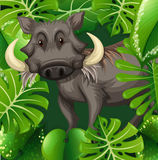 Wild pig in the bush Stock Photos